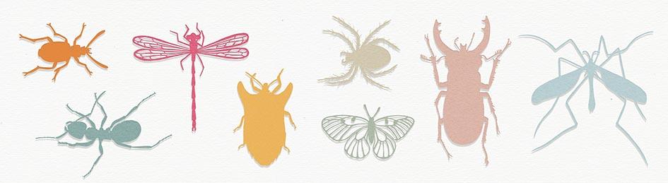 Geertje Aalders BEESTJES Insecten Strooisel